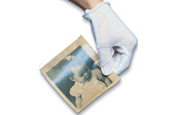 White Cotton Gloves/Large